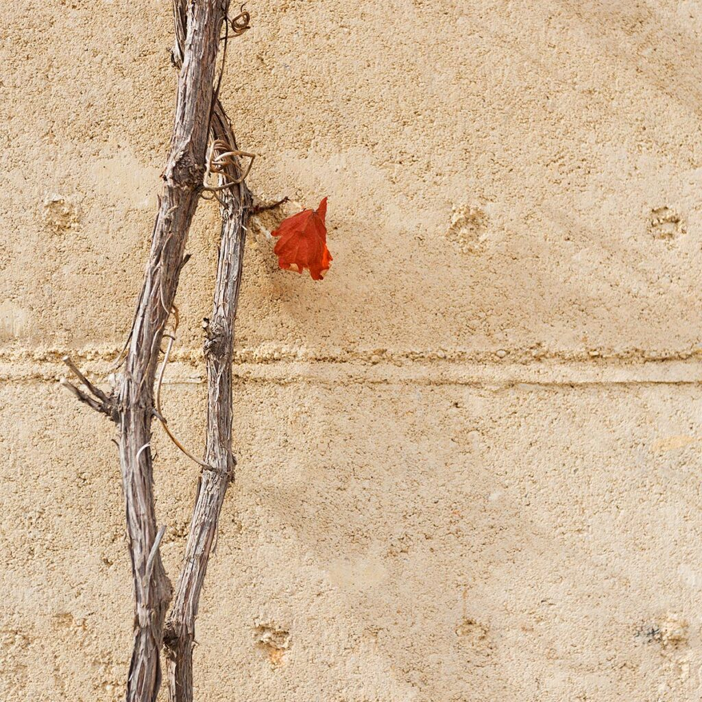 rammed-earth-texture-red-leaf-external