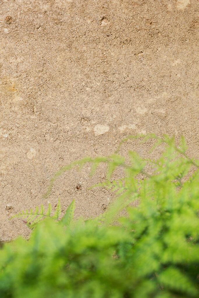 rammed-earth-texture-external-plant