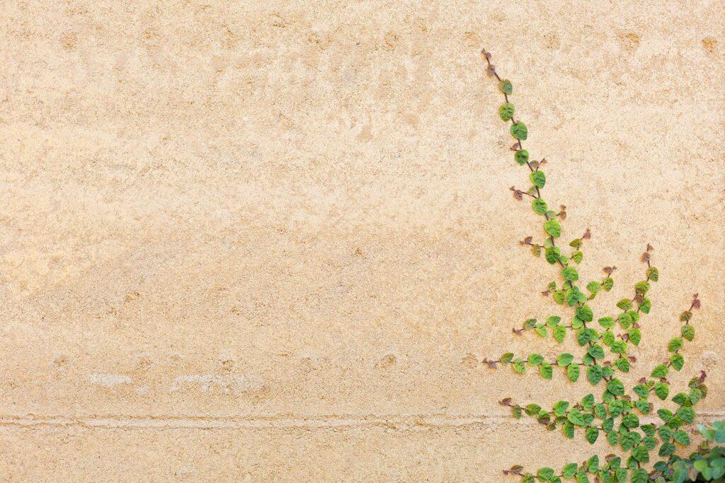 rammed-earth-external-texture-vine